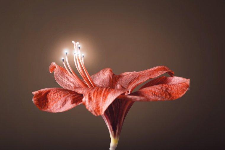 LampFlower
