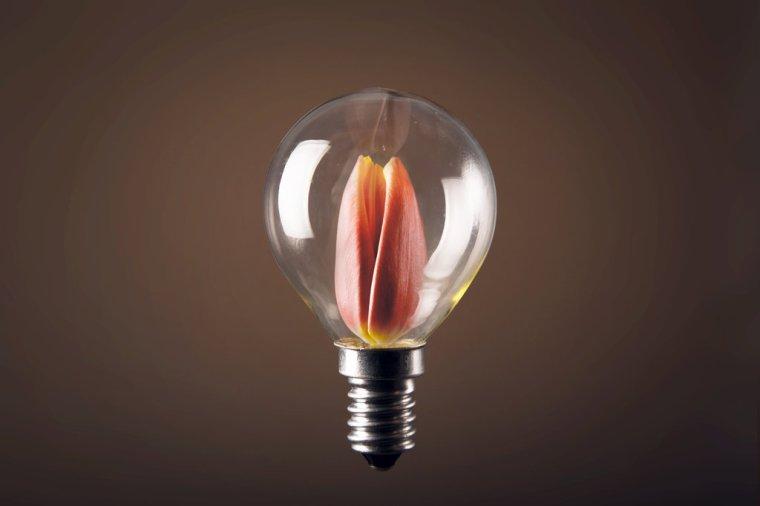 LampTulip