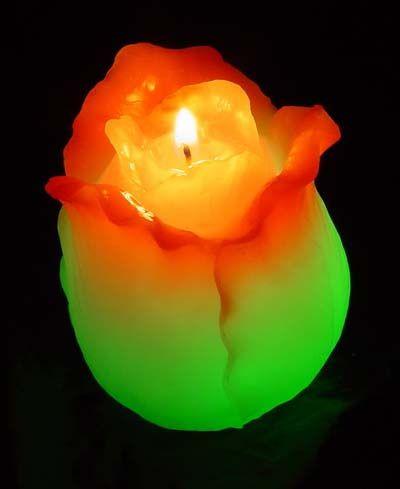 Tulip Soul