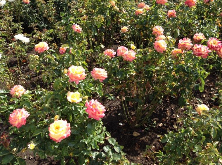 Moday in roses.jpg